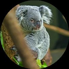 オーストラリア 火事 動物被害
